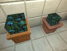 Creativerse elderwood flowers potted 2018-06-19 19-21-08-97