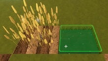 Creativerse Bog Water for Wheat01
