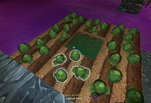 Creativerse lettuce sprouts heads 2017-08-11 21-51-16-53