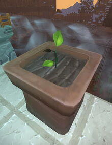 Creativerse sapling flower pot 2017-07-29 11-50-07-57 saplings