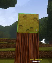 Creativerse Queen Bee placed does not need fertilizer14