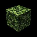 Leaf Oak