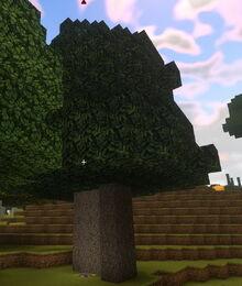 Creativerse elderwood tree grown from sapling 2018-10-16 13-19-13-43