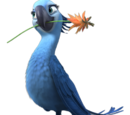 Jewel Macaw