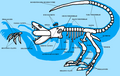 Aurixan Skeletal Diagram.png