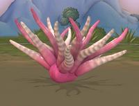 Pink Sea Anemone Spore