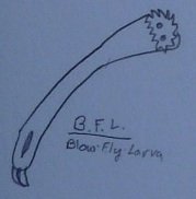 Black Fly Larva Concept