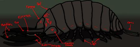 Roalch Diagram