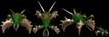 Lush Xarnivore Spore