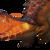 244 MoltenCrocodile Portrait