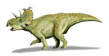 Albertaceratops BW2