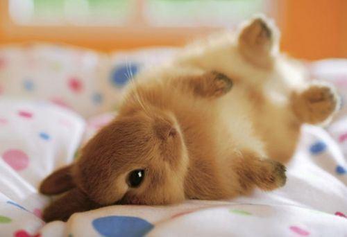 File:Baby-animals-19.jpg