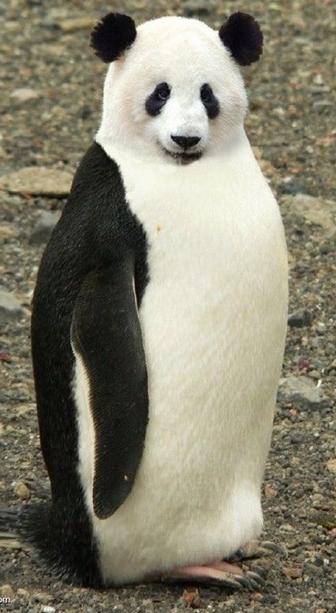 PANDA PENGUIN
