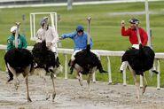 EMU+SING+DAY+RACES+Don+t+Call+Emu+jockey+Jeff+h9SOVbZWT2fl