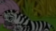 DTE Zebra