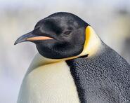 Emperor penguin by laogephoto-d609prv