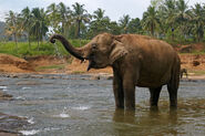 5-Unique-Places-to-Spot-Elephants-in-India-1