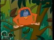 Stanley Orangutan