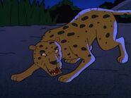TWT African Leopard