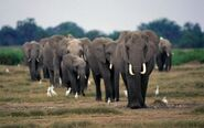Xelephants-group-2a.jpg.pagespeed.ic.ApKfhyQXtY