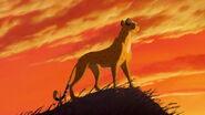 Cheetah-the-lion-king