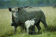 WhiteRhino MomBaby USE