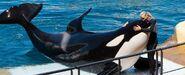 Marineworld-orca 1024