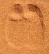 300px-Dromedary Footprint in Sand