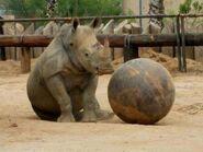 Rhino-main-320x240