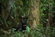 TIP15346-Black-Panther