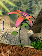 Pinky plant.png