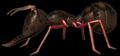 C3ant.png