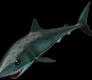 Rainbow Sharkling