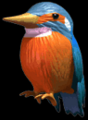 C3kingfisher.png