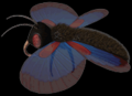 C3butterfly.png