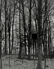 Slender-man-in-woods
