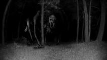 Misteriosa criatura en un bosque de dinamarca