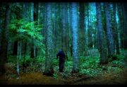 Scary-Forest-Seattle