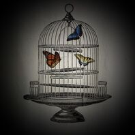 Birdcage-with-Butterflies-D
