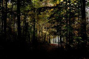 Slender forest 5