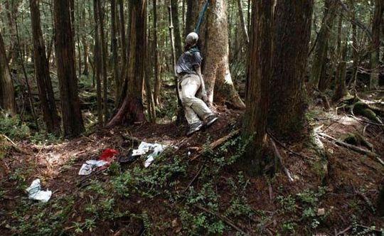 Japan's Suicide Forest | Creepypasta Wiki | FANDOM powered
