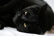 In-poland-a-black-cat-god-named-ovinnik-was-worthy-of-worship-photo-u1