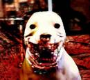 Canis Lupus Diabulus