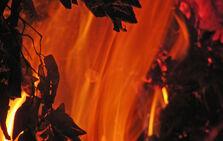 Burning-2-1176588-640x405