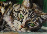 Brown-tabby-cat-mary-jo-zorad