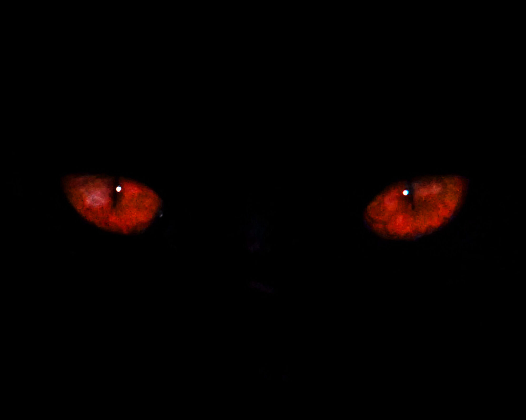 Black Cat With Pink Scary Eyes: FANDOM Powered By Wikia