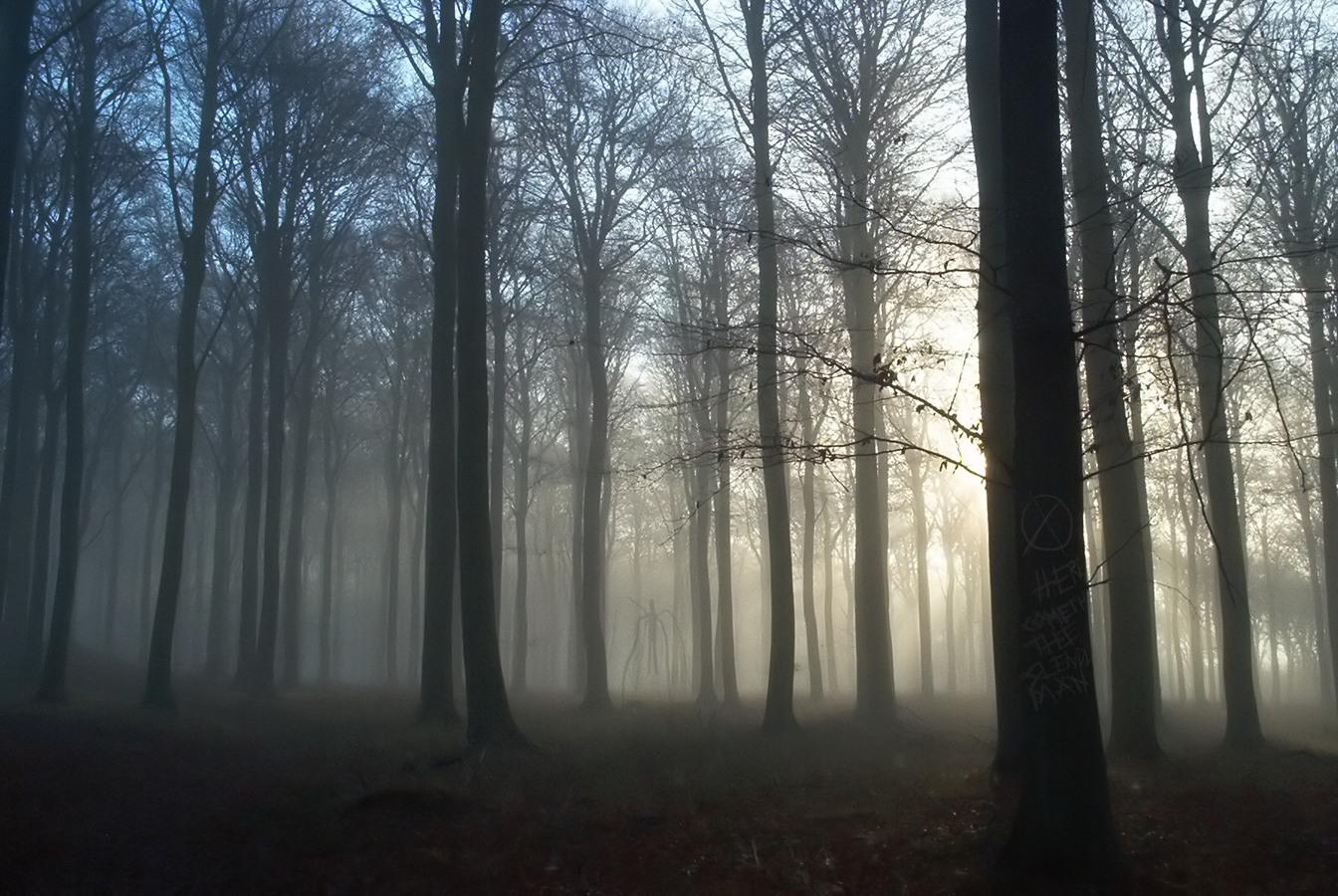 slender forest 2 png