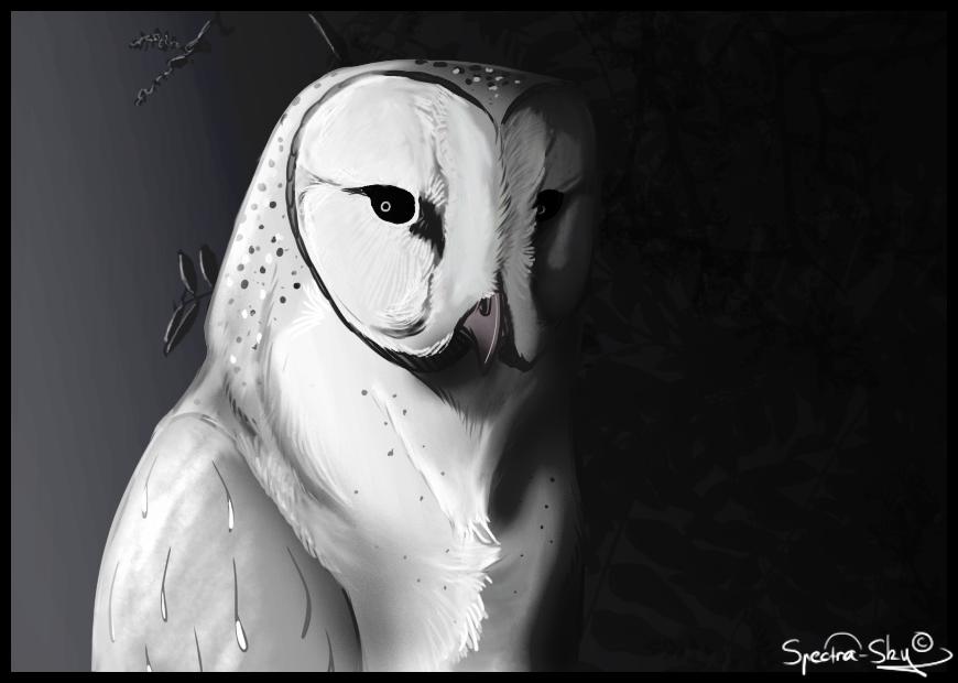 The White Owl | Creepypasta Wiki | FANDOM powered by Wikia