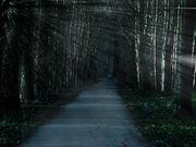 Trail-creepy-stock