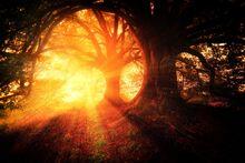 Trees-2562083 1920